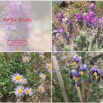 Photo database of wildflowers of Colorado